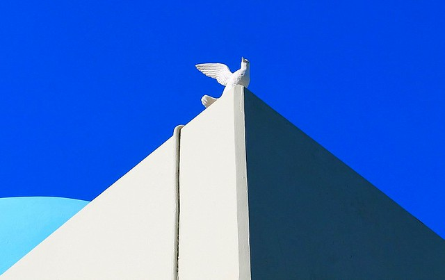 Dove on the top