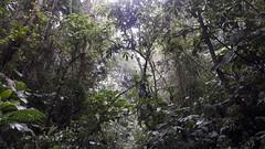 Deep in the Tropical PermaTree Jungle in Ecuador