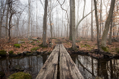 bridge water forest trees park woods stream fog onatrufarmpark sigma1020mm lewisboro southsalem westchestercounty newyork ny nature