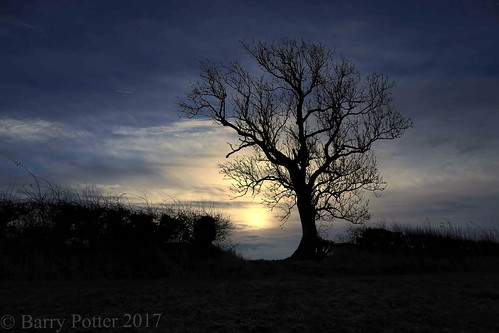 barrypotter edenmedia canon eos m5 tree sunrise