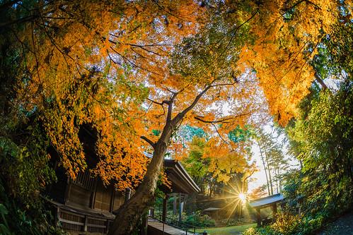 autumnleafcolors autumn kanagawa autumncolors autumnleaves ozenjitemple autumnmorning kawasaki japan ozenji