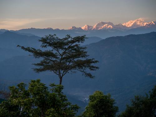 westbengal singritan glenburnteaestate india darjeeling singringtam in