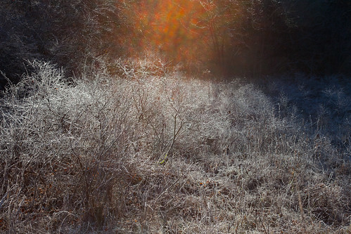 frost cold morning sunrise canon5dmarkii harvardma