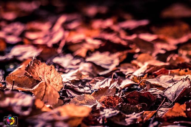 Autumn Leefs