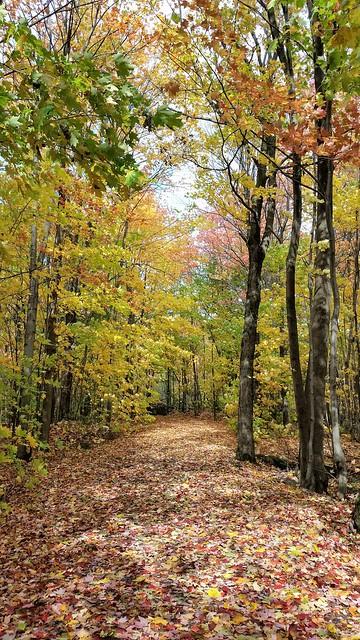 Un Sentier Dans La Nature. 2017 10 08 13:42.22