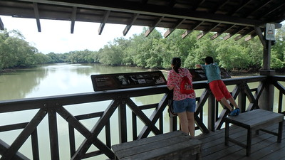 Sungei Buloh Wetland Reserve: Main Bridge