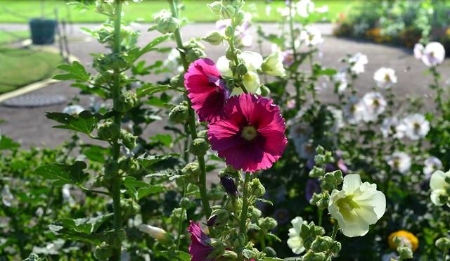 Wien Flowers