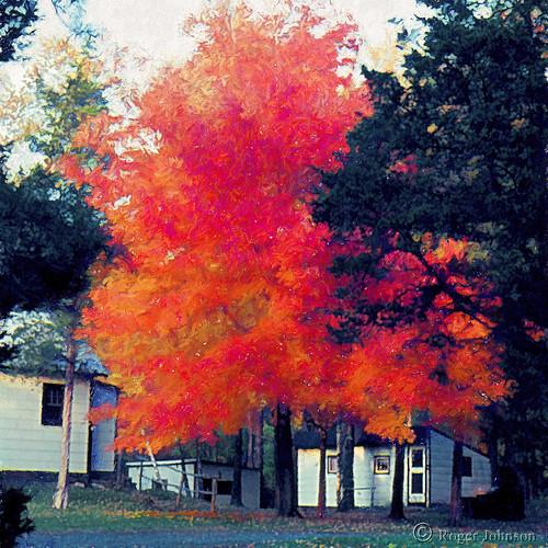 mapletree fallcolors autumncolors glastonbury connecticut rogerjohnson
