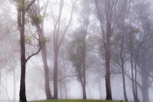 mist morning landscape trees
