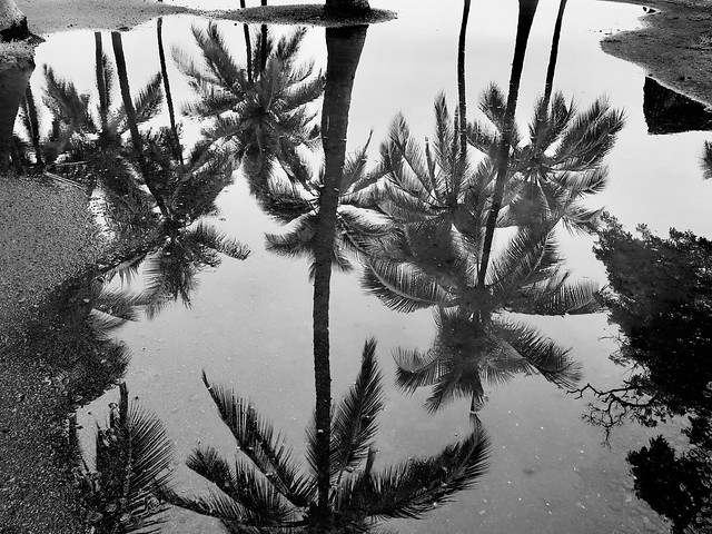 Palm Reflections on Black Top