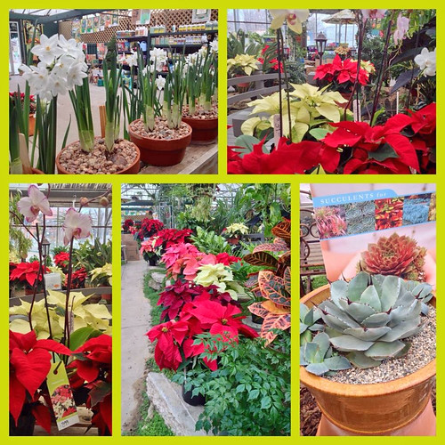 Festive Holiday Plants — Photo Courtesy Brian Wheat, AAF, PFCI, of Lafayette Florist, Gift Shop & Garden Center in Lafayette, Colorado. www.lafayetteflorist.com | by Flower Factor