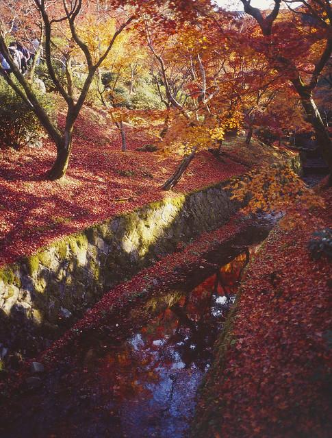 東福寺/Kyoto(explored)