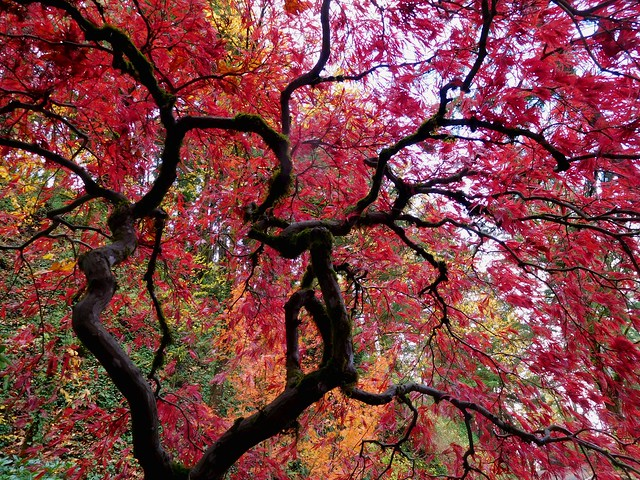 Accented by Autumn by Nina
