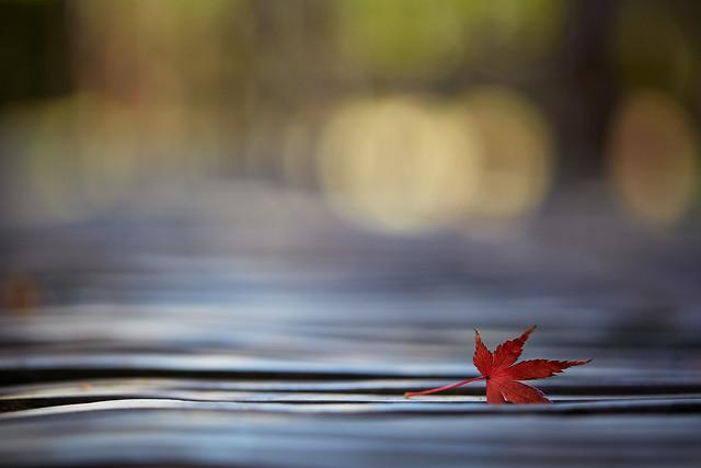 I feel autumn.