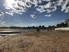 Horses on Narrabeen beach