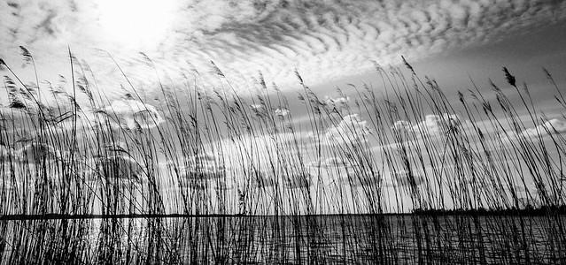 Thru the reed