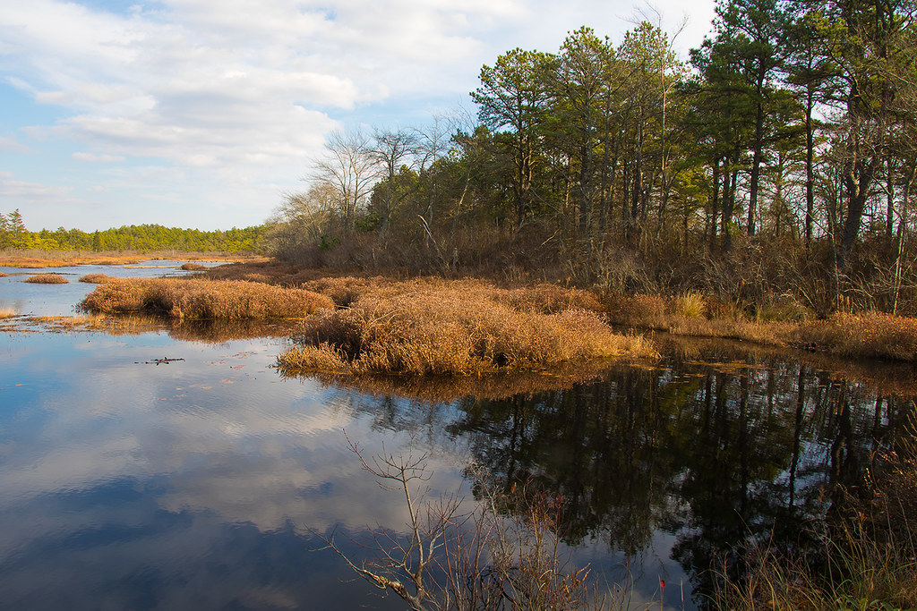 Whitesbog - NJ Pinebarrens