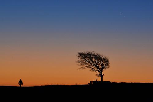 sunrise orange blue lone stargazer conjunction jupiter venus astro planets astronomy tree silhouette horizon nikond5200 cleevecommon gloucestershire uk sky