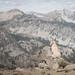 Summit dogs on North Navarre Peak by johnwporter