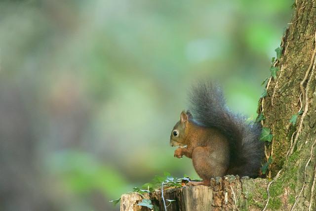 Je m'appel L'écureuil, et je travail a la Caisse d'Epargne