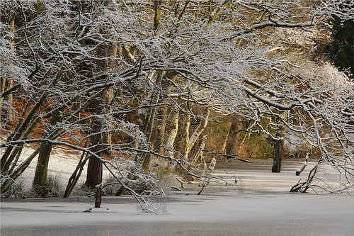 borderfx trees delamere forest cheshire uk dead lake winter snow frost sunrise