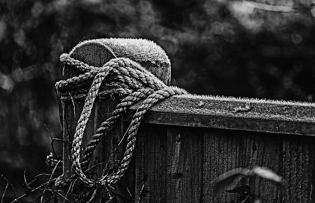 365-343 Rope Frost