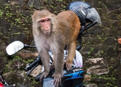 in Kathmandu_19 maimuta pe motocicleta | by Valentin Groza