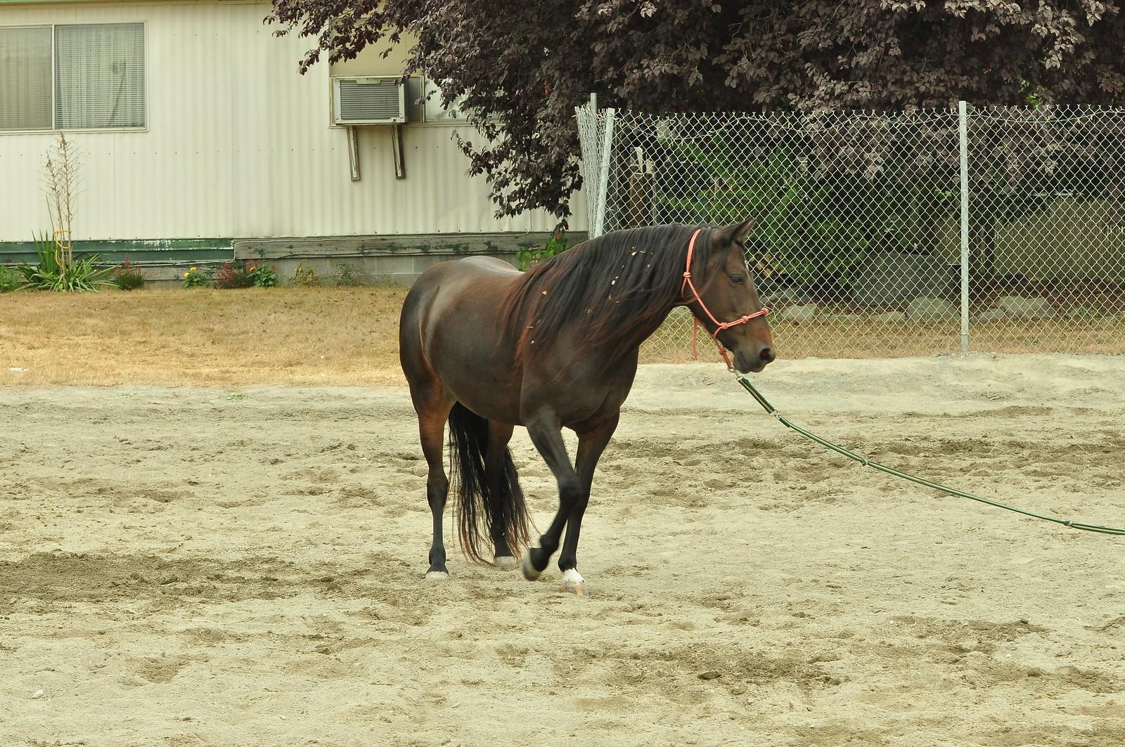 Mustang (paard) - Horse Scanner