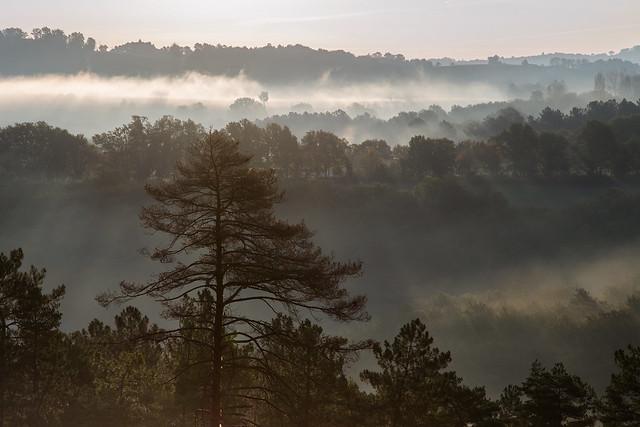 Woodland Transparency