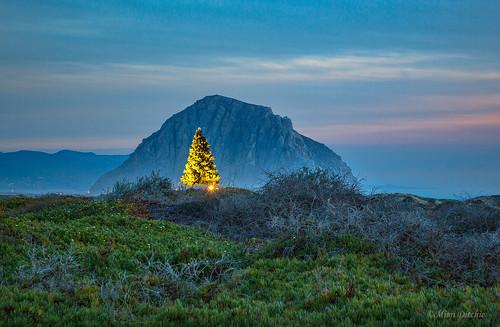 christmas christmastree christmaslights morrobay morrorock rock sunset