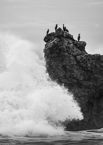 ndfilter sonomacounty beach birds pacificocean waves cormorants rock wave arches ca hwy 1 nature blackandwhite