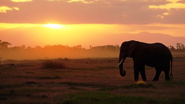 Sundown with elephant