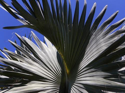 Metallic Fan Palm Swirl