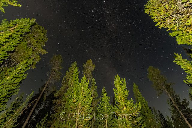 Night in Lodgepole Pine Forest in Newberry National Volcanic Monument