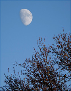 Boxing Day Moon