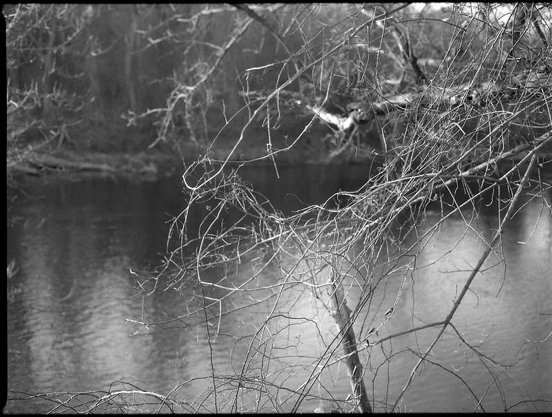 tangled branches and vines, riverside, French Broad River, Carrier Park, Asheville, North Carolina, Mamiya 645 Pro, mamiya sekor 80mm f-2.8, late December 2017