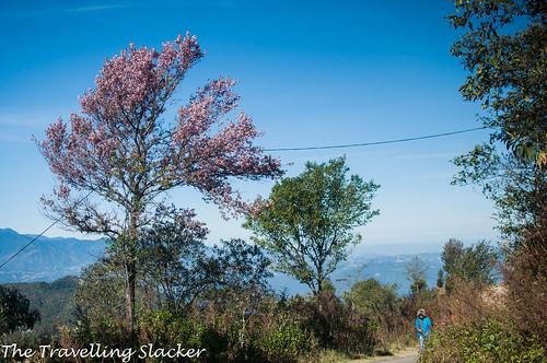 Pfutsero Phek Nagaland (7)   by travelling slacker