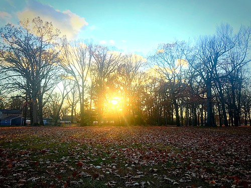 2017 fall november jaycee starr sun evening sunset trees park michigan royaloak leaves