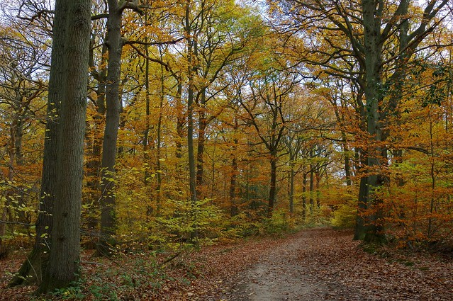 Following the trail through Blean Woods......
