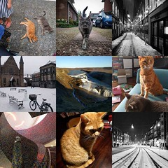 My #2017bestnine: cats and snow