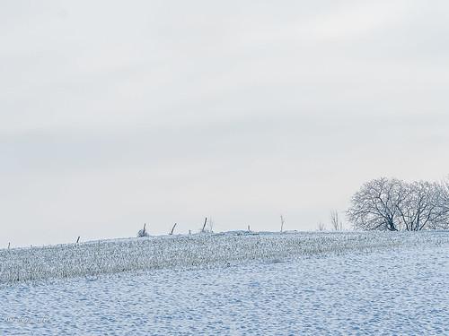 fields | by hans eder1