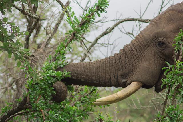 Kruger National Park 90