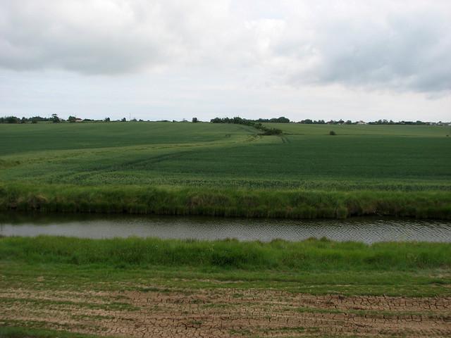 Fields near West Mersea