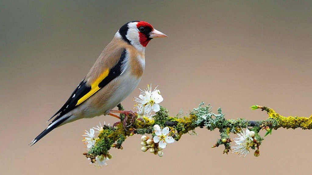 Beautiful Birds Wallpapers Free Download 1 Beautiful Bir Flickr