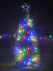 Christmas Tree Rampton Dec 2017
