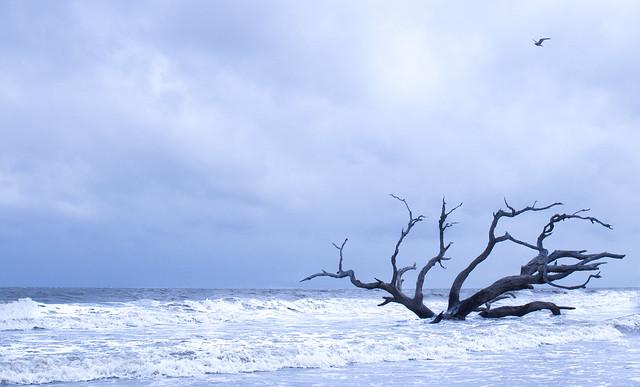 Driftwood Beach - Jekyll Island - Explore #2