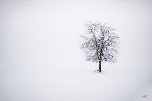 millbay millbaybc cobblehill cowichanvalley cowichan vancouverisland bc britishcolumbia canada snow tree lonetree lonely alone sony sonya7m2 a7m2 sigma70200mm landscape landscapephotography minimalist