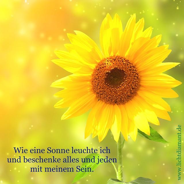 All Sizes Sonne Sonnenblume Geschenk Sein Affirmation