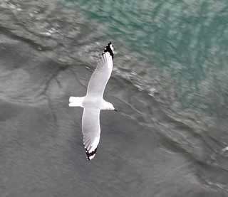 SEAGULL WATCHING THE  CHURNED UPHEAVAL OF THE SEA AS WE LEFT THE DOCK IN LUDERITZ, NAMIBIA, AFRICA.
