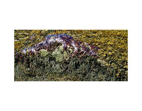 Algues / Seaweeds | by bernard marenger photo imagination